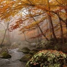 "Fred Eberhart, ""Robinson River Elms,"" 40 x 40, photograph"