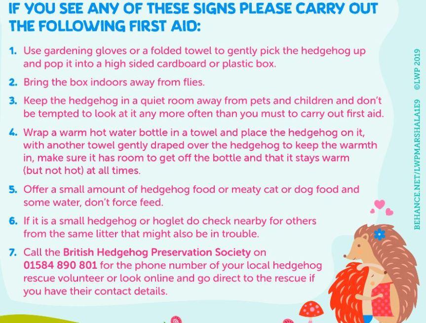Hedgehog First Aid