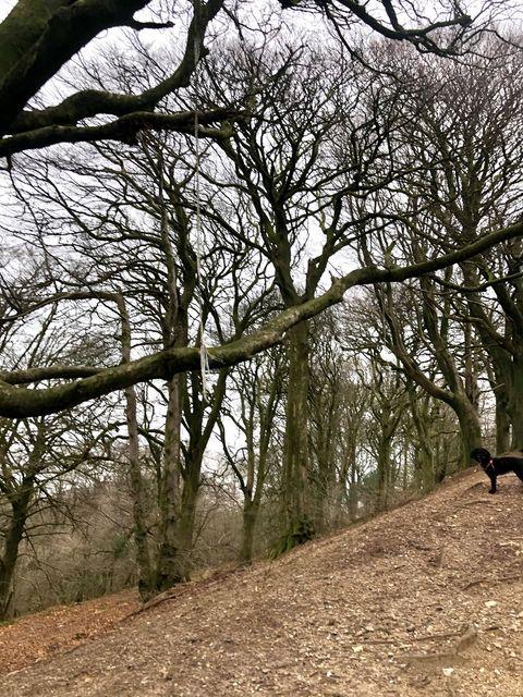 Tree Swings Vandalised At Top Of Lewesdon Hill