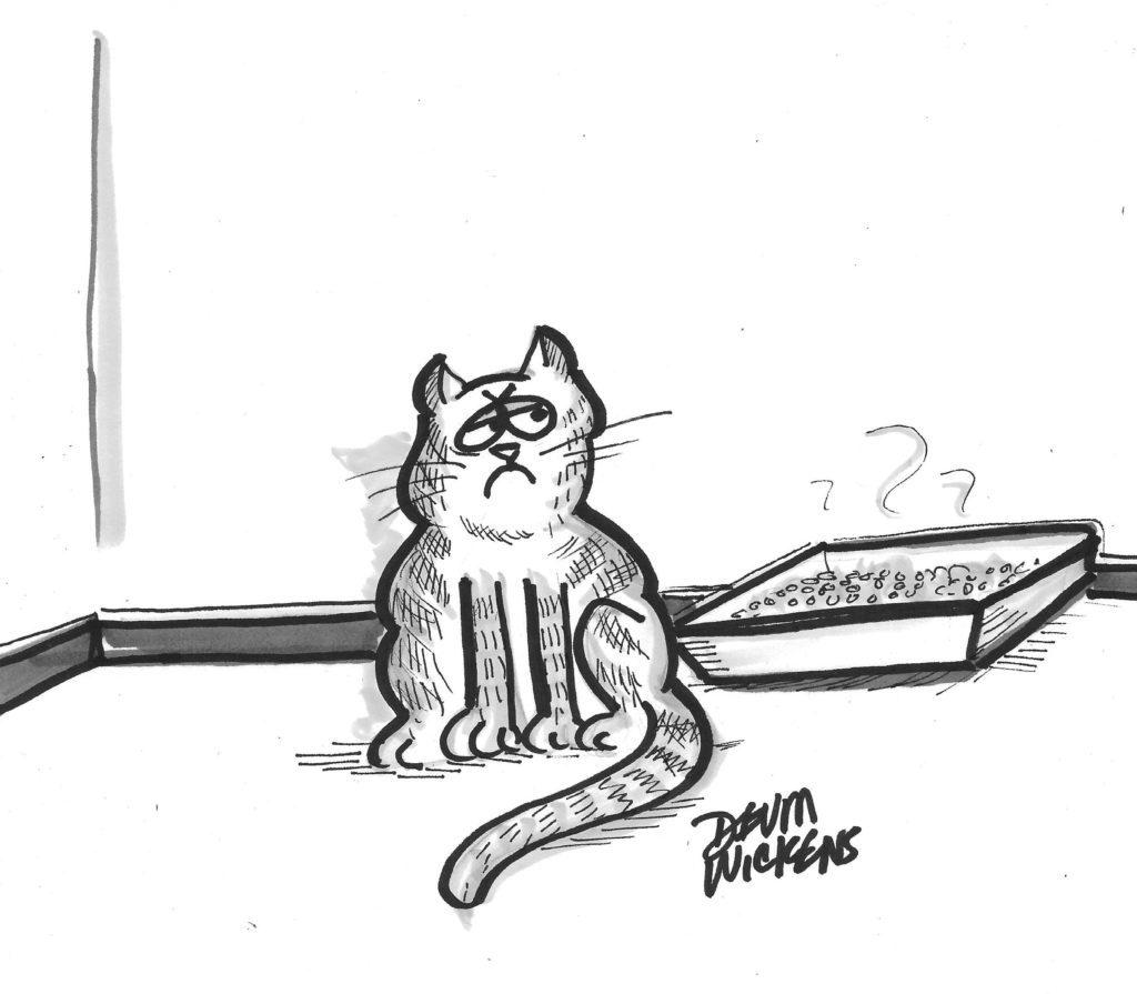 Cat Complaint Dept