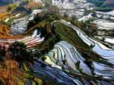Yuanyang Terraced Fields