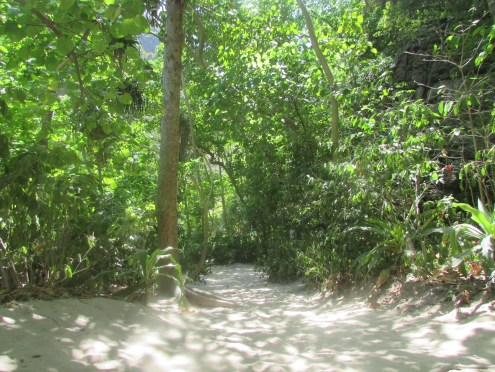 A trail leading into the jungle