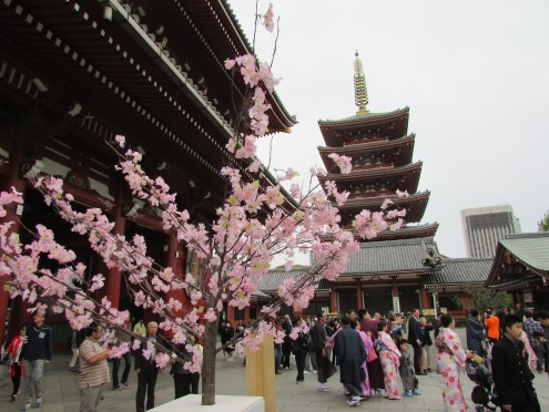 We love seeing the five-story pagodas, and the cherry blossoms!