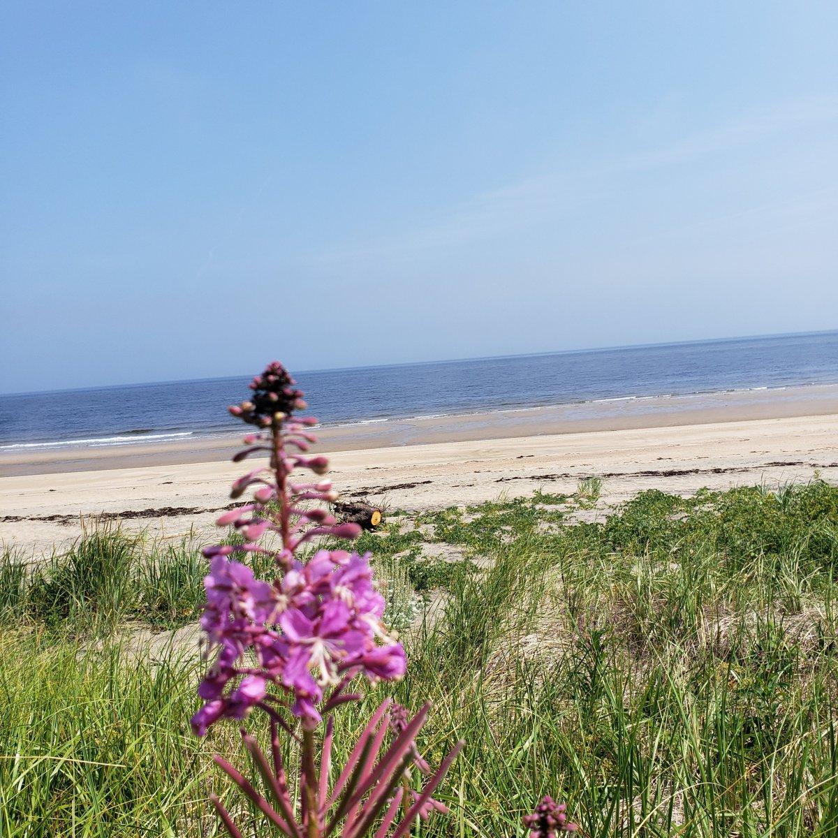 Fleur sur la plage de Pointe-aux-anglais
