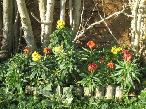 fleur jardin 22-12