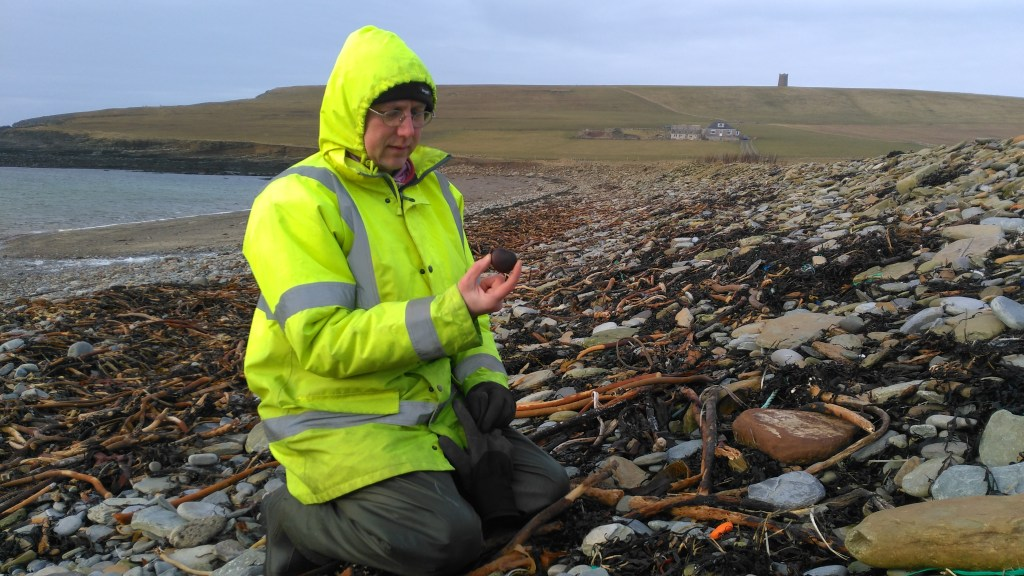 Chris finds a Sea Heart, also known as a Molucca Bean, at Marwick Bay, Orkney.