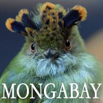 Monga Bay - Environmental Science and Journalism