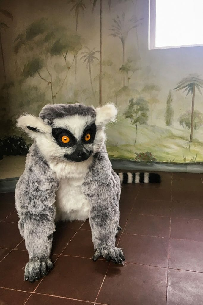 Eltham Palace Lemur London UK