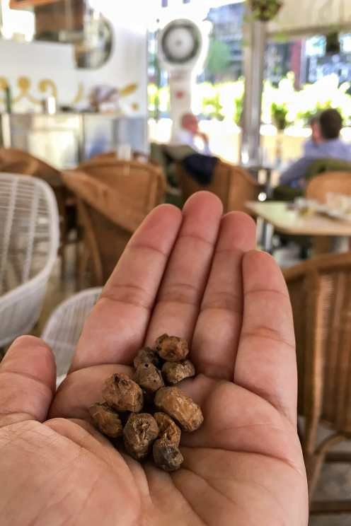 Chufas tubers on one hand in a cafe in Valencia