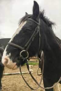 Adventure in Dublin Horse killegar stables county dublin ireland