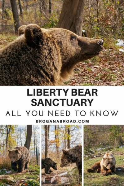 Visiting the Libearty Bear Sanctuary in Romania - An Ethical Sanctuary
