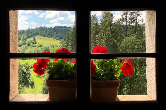 View of a hill from a window with a planter with red flowers