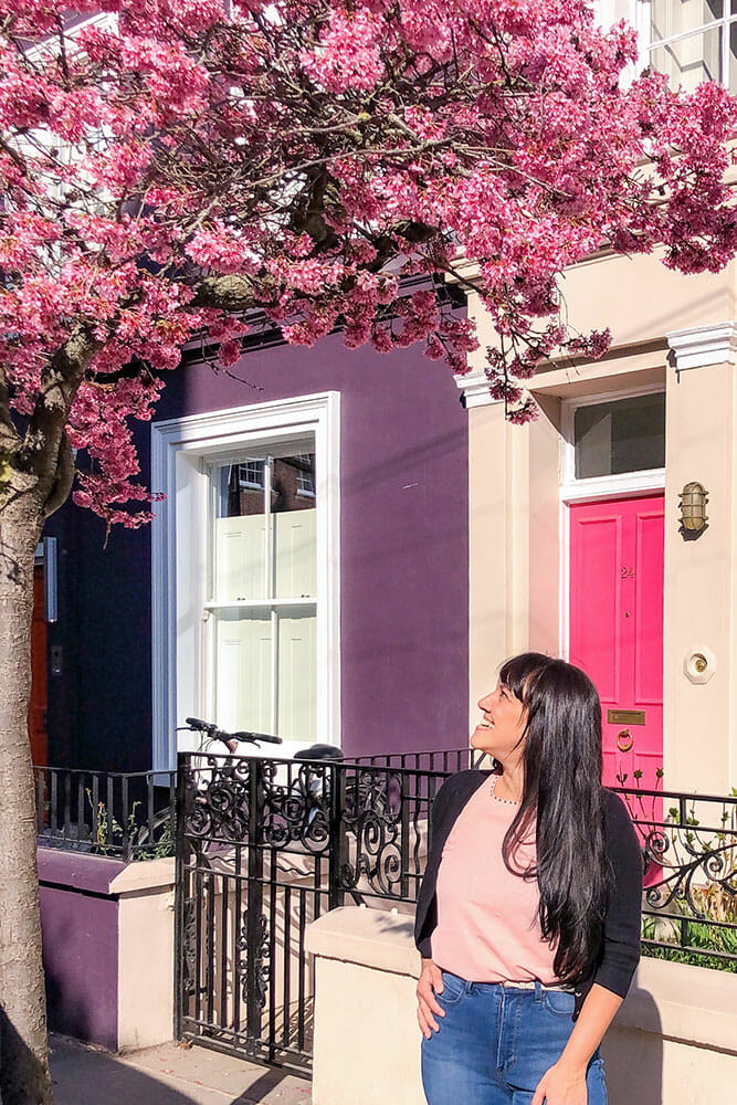 Pink cherry blossoms in front of a purple house and a pink door