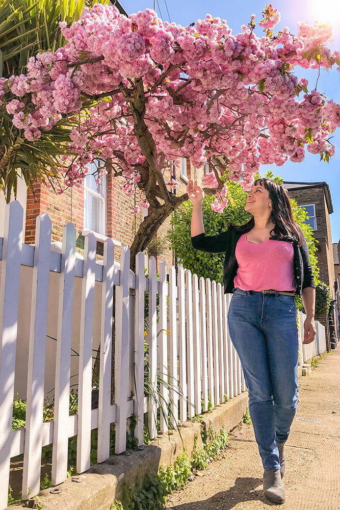 Woman standing outside a white picket fence looking up at a small pink cherry blossom tree