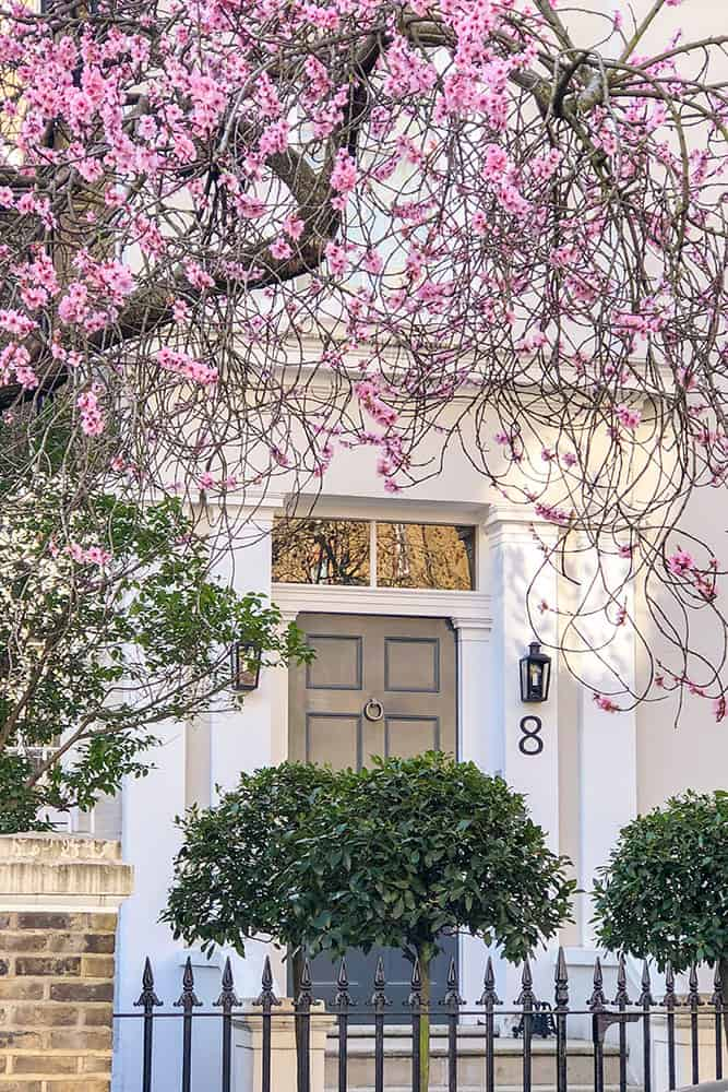 Grey door with number 8 next to it framed by pink cherry blossom branches from the top and two round hedges from the bottom