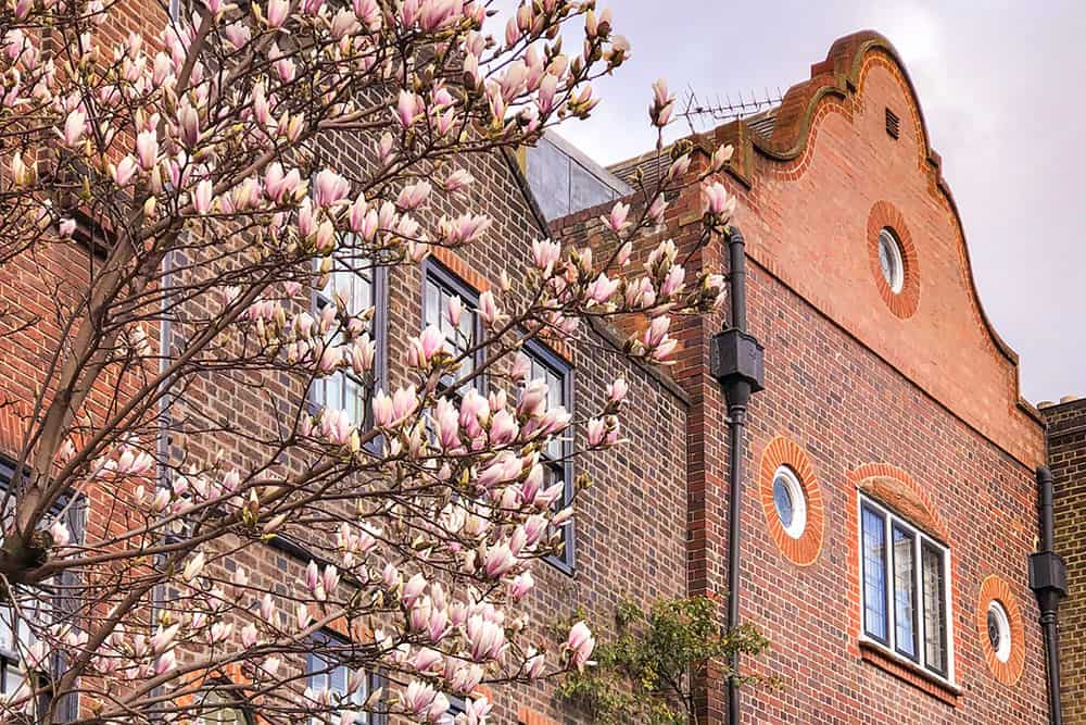 Magnolias outside a red bricked building with a Dutch gable