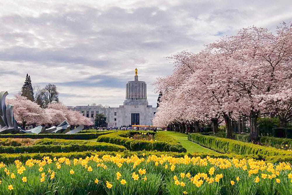 Landscaped gardens with daffodils in the foreground, cherry blossom trees and a capitol building in the background