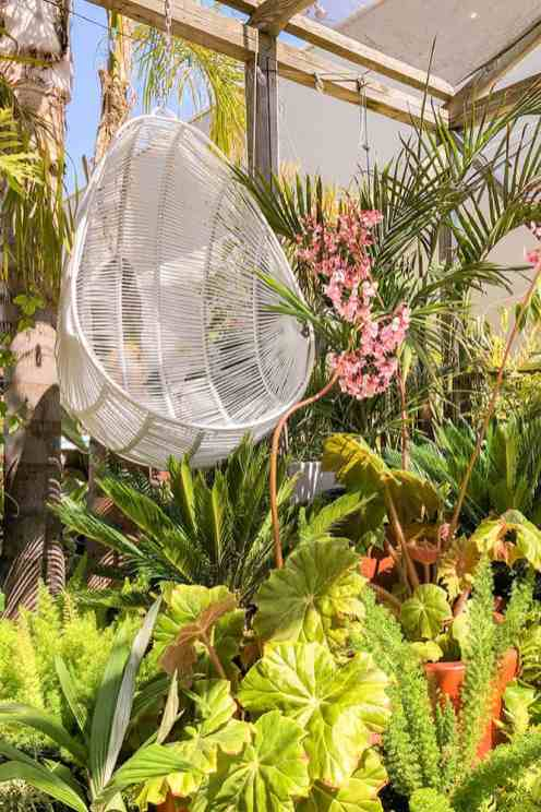 An egg-shaped hanging chair with ferns and palm plants in the background