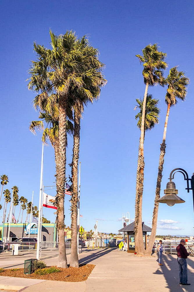 Palm trees along a beach esplanade