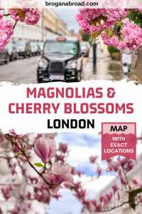 Where to See Magnolia and Cherry Blossom in London