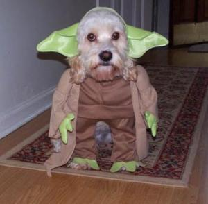 chien en costume de brokatof spirit