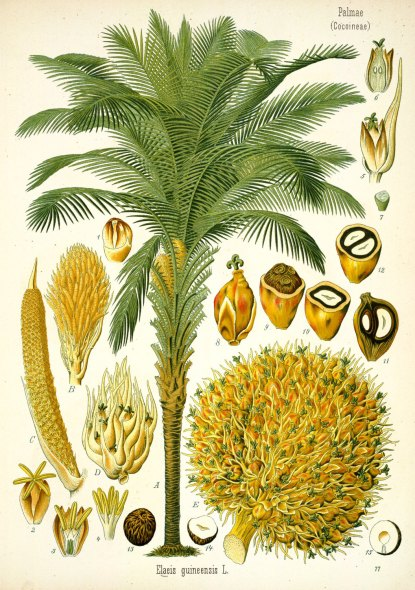 Palm Botanical Print by Ariadnathread