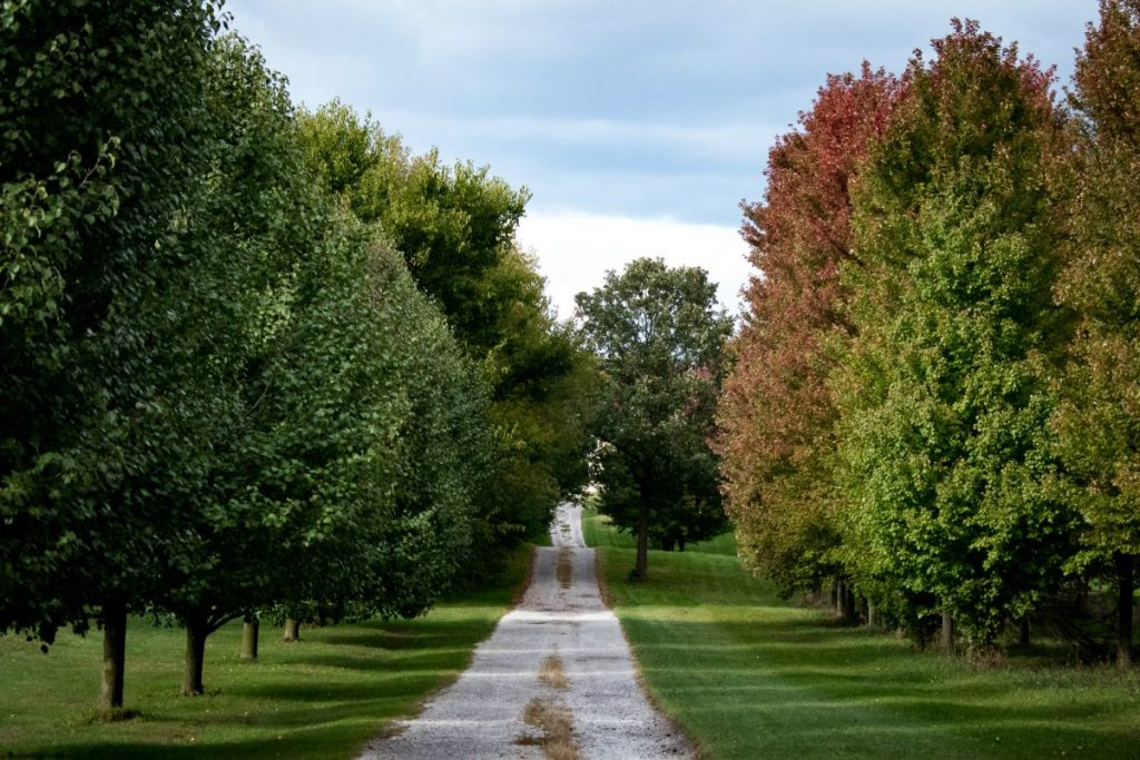Scenic Fall Colors Drive