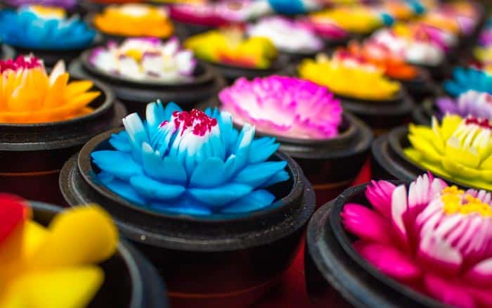Chiang Rai things to do - Flowers