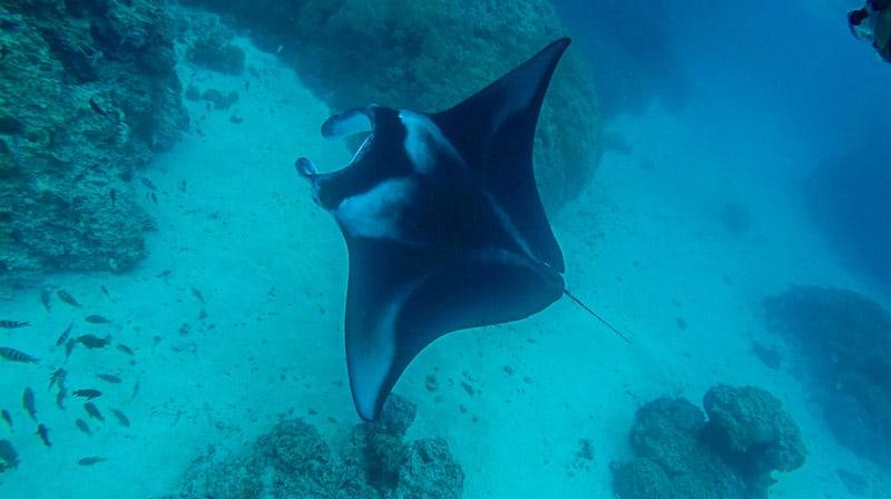 The Islands of Tahiti Borabora Manta Ray
