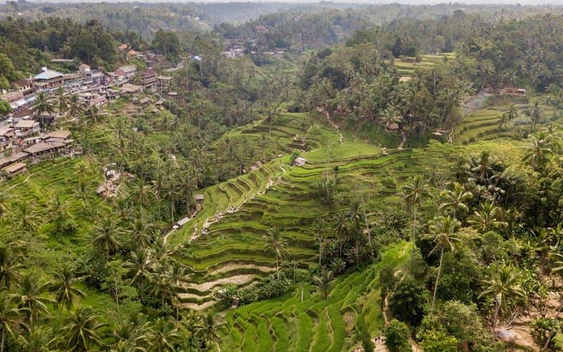 things to do in bali tegallalang rice paddies, visit ubud rice paddies