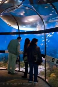 Make shift aquarium.