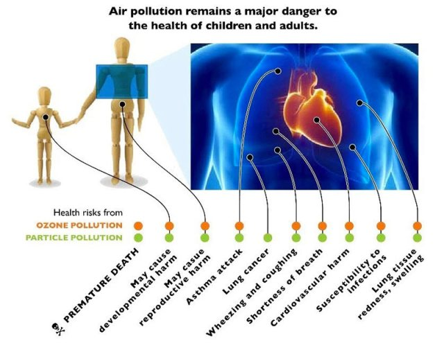 "From the American Lung Association's ""Health Effects of Ozone and Particle Pollution."" (Courtesy American Lung Association)"