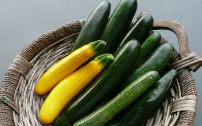 Free Lunch Series: Zucchini
