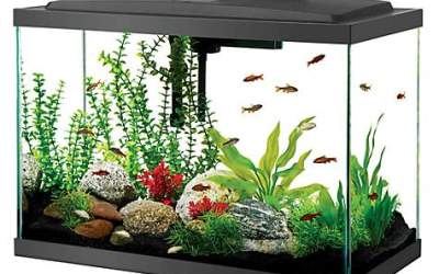 Hobbies Series: Fish–Getting Your Home or Class Aquarium Setup for Pennies