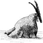 Lupercalia, Jul, Harlekin och Varulvar