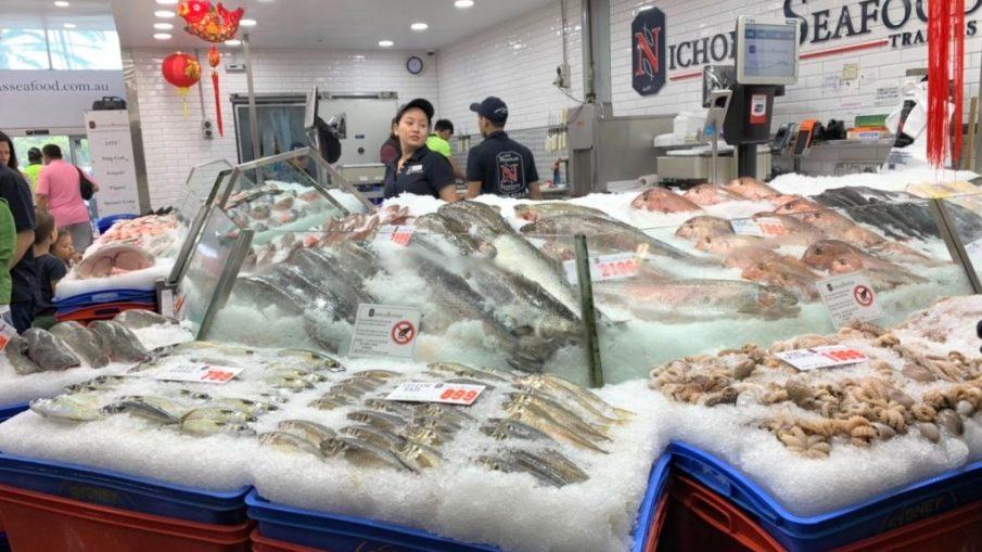 雪梨一日遊 - 魚市場