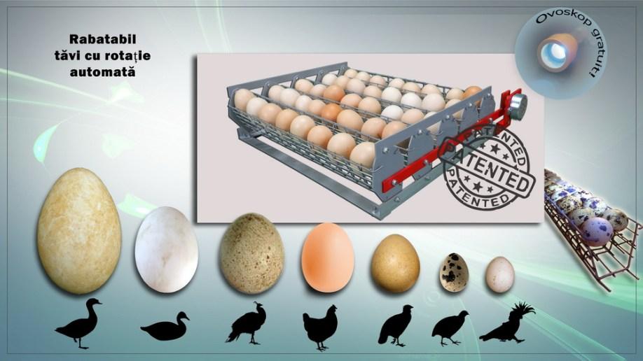 Tăvi detașabile ouă automate de lovitură de stat cu casete