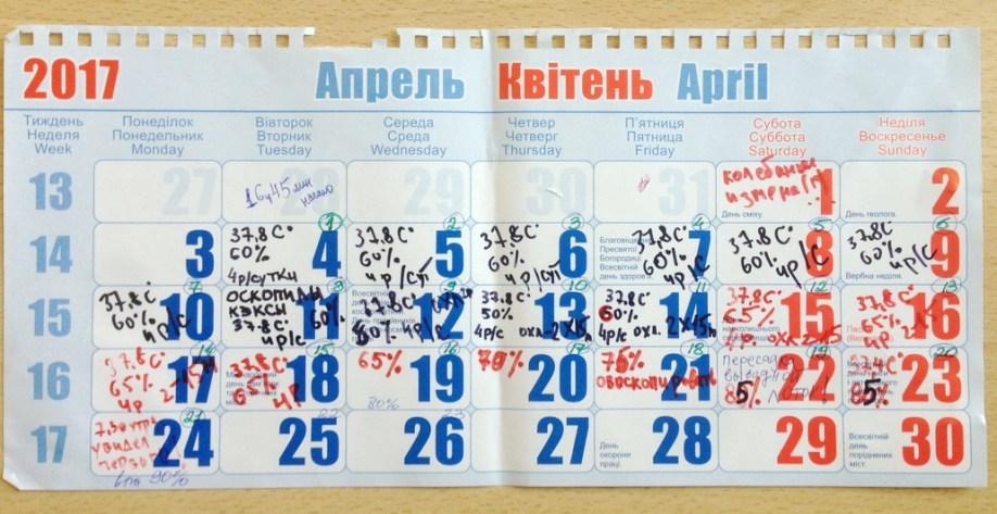 Календар інкубації курей в офісі. Інкубатор Broody