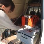 Перевезення курчат у вантажному відсіку автомобіля