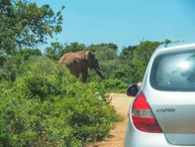 Driving up to an elephant