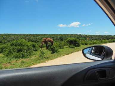 Elephants at close range