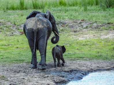 Mum & bub leaving the watering hole