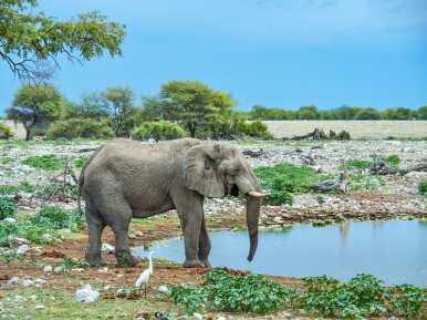 Beautiful wild elephant in Etosha National Park