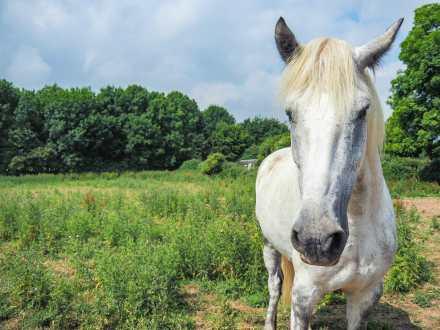 Wild Irish pony in the field