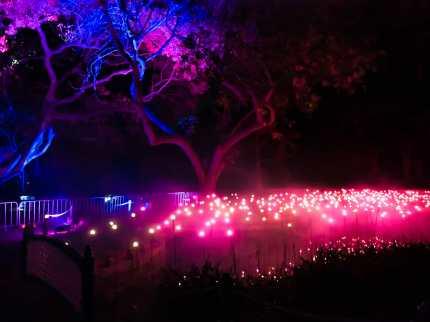 Light display in the Royal Botanic Garden