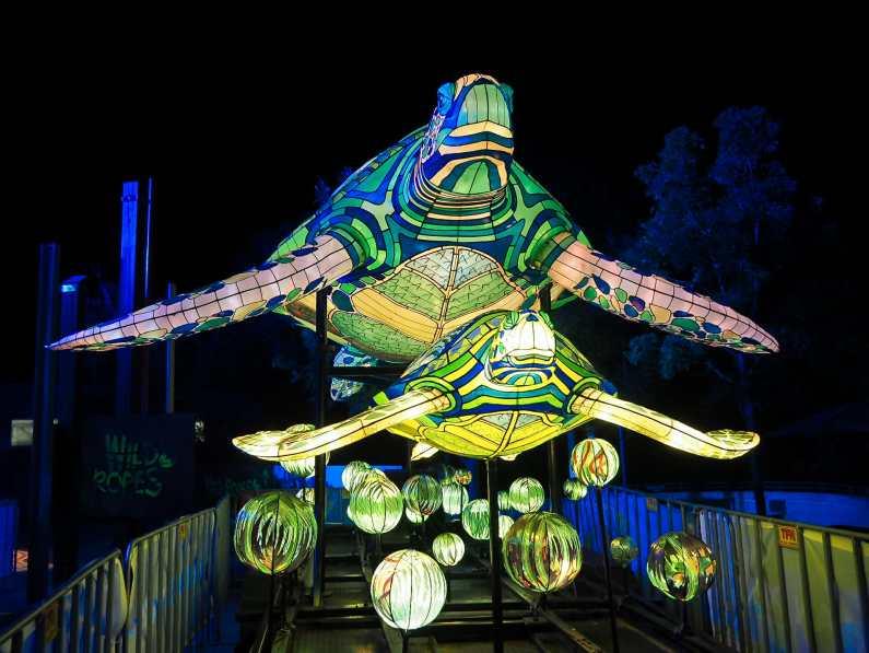 Sea turtles cruising through Taronga Zoo