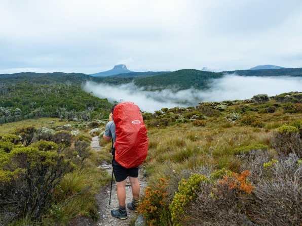 Cal enjoying a foggy morning walk