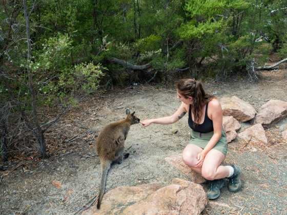Sweet little wallaby kisses before our hike