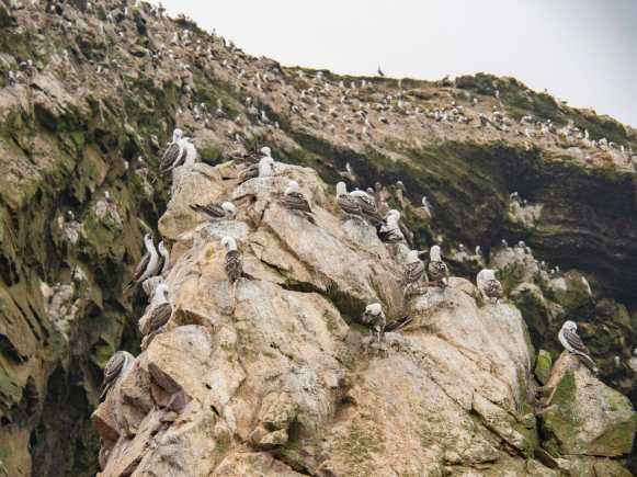 Thousands of birds live in the Ballestas Islands