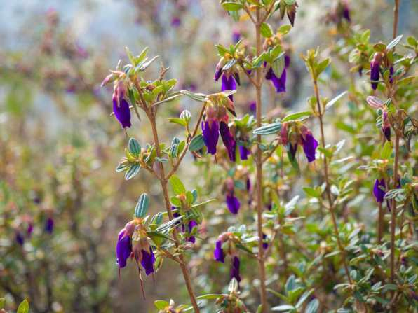Beautiful wildflowers on the walk